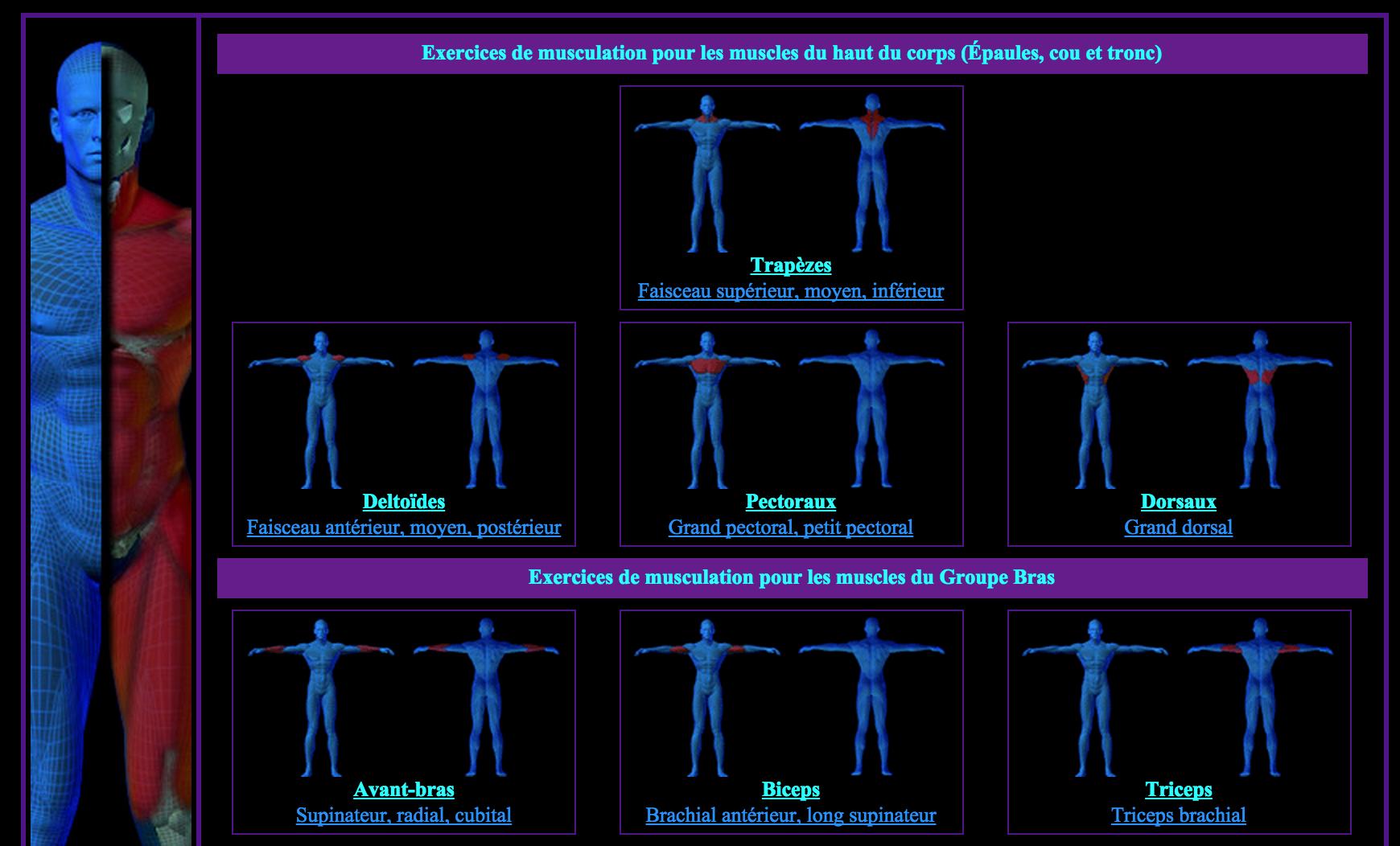 Muscuakelys